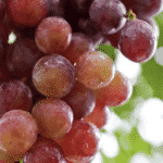 Picture of grapes, which contain resveratrol