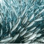 DHA thumbnail picturing fish